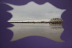 color and nature, purple with muddy lake, 2015
