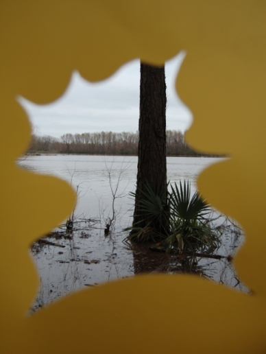 color and nature, yellow view of lake tree with saw palm, 2105